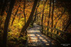 Fontenelle Forrest Nebraska by Daylights  Edge, via 500px