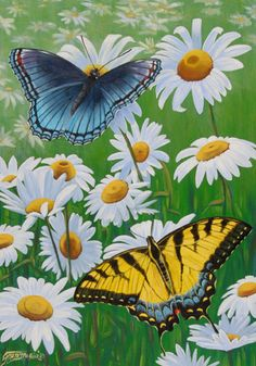 butterflies and daisies