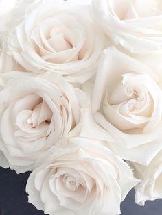 Hd Flowers, Beautiful Rose Flowers, Beautiful Flowers Wallpapers, Pretty Wallpapers, Flowers Nature, Amazing Flowers, White Flowers, White Roses Wallpaper, Flower Iphone Wallpaper