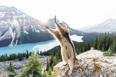 10 Highlights from the 2015 National Geographic Photo Contest