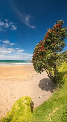 Golden sand beach, Tutukaka Coast, Northland, New Zealand. I used to go here as a young child on holiday. New Zealand Beach, New Zealand Travel, The Beautiful Country, Beautiful Places, Tasmania, New Zealand Houses, New Zealand Landscape, Places Around The World, Around The Worlds