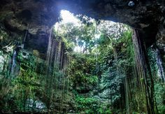 Cenote Ik Kil, Yucatan by Galia Venguer - Landscapes Caves & Formations ( cancun, places to visit, colorful, mexico, dive, travel, beauty, cave, paradise, life, nature, chetumal, merida, visitmexico, yucatan, tulum, inspire, quintana roo, naturaleza,  )