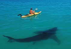 In spirit of almost shark week - I really hope this has been photoshopped.