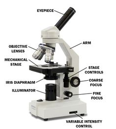 A Study of the Microscope and its Functions With a Labeled Diagram ...