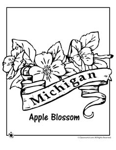 state flower coloring pages michigan state flower coloring page classroom jr