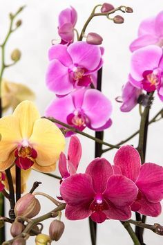 Tips and tricks: deco, DIY, garden, beauty . Beautiful Flowers, Rose, Orchid Care, Horticulture, Phalaenopsis, Garden Accessories, Floral, Garden Care, Flowers Nature