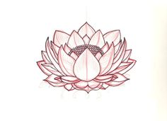 Lotus Sketch Pictures Images And Photos