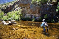 rivers of western cape - Google Search Trout, Fly Fishing, Rivers, South Africa, Cape, Journey, Outdoors, Google Search, Places