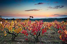 El número de vides plantadas por hectárea en un viñedo y su distribución o alineamiento tienen también sus consecuencias sobre la calidad del vino