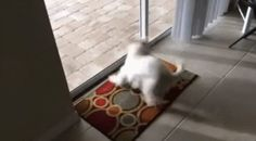 Dog arrives at his new home and notices the swimming pool - GIF on Imgur
