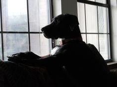 Doggy Depression