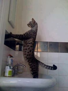 Cat kitten love adorable staring in mirror