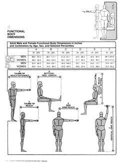 Body dimensions 1   Human Dimension & Interior Space, Julius Panero & Martin Zelnik