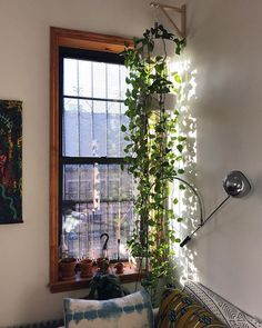 The most beautiful indoor plants perfect for apartments. No green thumb required!! These low maintenance plants are perfect for living rooms and even bathrooms. Spruce up your home with the best indoor hanging plants. Learn how to hang plants in unique and fun ways. #plants