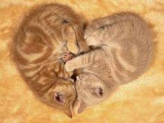 love heart kittens. So CUTE!