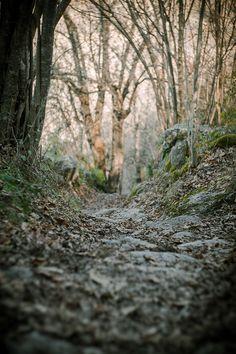 Bosque en otoño. Benasque.