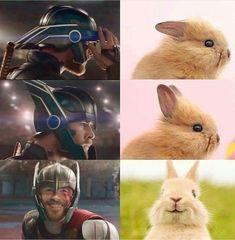 25 Marvel memes that are never funny - Avengers - Humor Avengers Humor, Marvel Avengers, Marvel Jokes, Funny Marvel Memes, Dc Memes, Memes Humor, Marvel Heroes, Funny Comics, Thor Meme