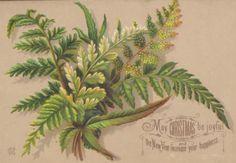 Victorian fern Christmas postcard