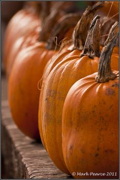Great depth of field...and great Pumpkins!!