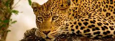 Book your dream African safari tour to Africa's most alluring destinations including Kruger National Park, Botswana, Kenya, Tanzania and more. Jacob Zuma, Rhino Africa, Wilderness Trail, Blue Train, Private Games, Victoria Falls, Kruger National Park, Game Reserve, In 2015
