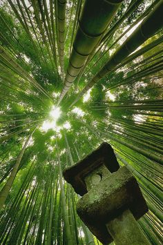Bamboo forest in Japan: Photography by  Danny Dungo
