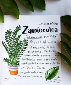 – Gardening Tips Hanging Plants, Potted Plants, Indoor Plants, Flower Pot Design, Herbal Essences, Plants Are Friends, Love Garden, Plant Illustration, Cactus Y Suculentas