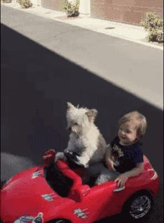Dog driving car with kid gif, laugh out loud! Follow RUSHWORLD. We're on the hunt for everything you'll love!