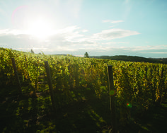Rove Estate Will Combine Wines and Views | Spring 2016