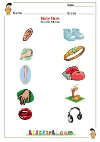 Human Body Parts worksheets for Children kindergarten