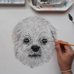 Instagram Challenge, Owl, Bird, Drawings, Artist, Painting, Animals, Design, Animales