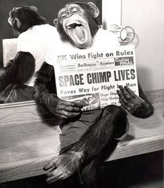 Jack, el primer mono norteamericano que regresó con vida del espacio muestra el periódico con la histórica noticia. 125 impactantes fotos para dar un viaje por la historia (Primera Parte) - Cultura Divertida