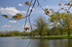 Spring at Tampier Lake Photo By Michael Kappel