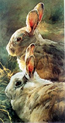 """Rabbits"" Watercolor Stan Miller"