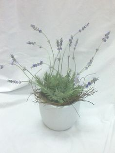 Fragrant Lavender Pot Plant from Sendabasketsa - Unley. South Australia. www.facebook.com/... All those special occasions. Flower arrangements and Poseys, Fresh and Silk sent seperately or include in your Gift Basket, Gourmet Hamper or Box, 'Mothers' Day' 'Fathers Day' 'New Baby' 'Anniversary' 'Birthday' 'Happy Easter' 'Merry Christmas', 'Congratulations - 'Promotion' 'New Job' 'New Home' and more. Corporate Gift Baskets, Corporate Gifts, Congratulations Promotion, Lavender Potted Plant, Easter Flowers, Hampers, South Australia, Easter Baskets, Happy Easter