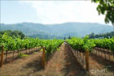 Napa Valley Picnic and Winery Engagement Session