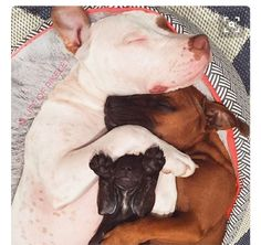 The perfect pitty pile! ❤