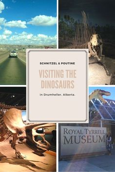 Visiting the Dinosaurs (Posts by Schnitzel&Poutine) Canada Summer, Western Canada, Poutine, Winter Sports, Dinosaurs, Fun Activities, Road Trip, Posts, Explore