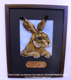 """""""Hare Today"""""""