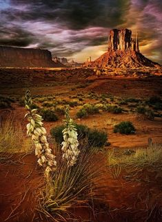 Agave Plant & Mesas, Southwest Desert, USA | Most Beautiful Pages