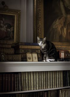 Perfect library with the essential addition of a cat -The New Victorian Ruralist: April 2013