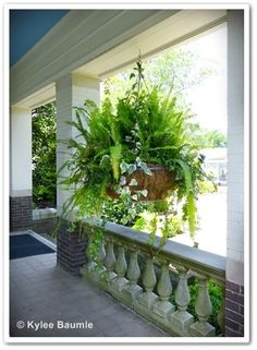 Simple hanging container - shade, Front porch.