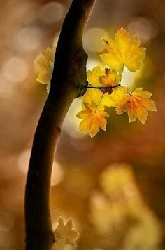 Autumn bokeh leaves by Eva0707 Autumn Day, Autumn Leaves, Golden Leaves, Bokeh Photography, All Nature, Belleza Natural, Belle Photo, Beautiful World, Simply Beautiful