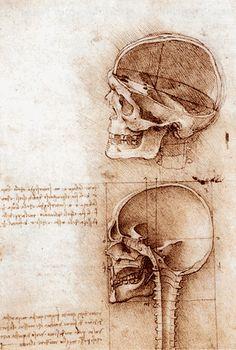 Leonard de Vinci / Leonardo da Vinci - Dessins anatomiques de deux crânes - 1489     Dessin à la plume sur pierre noire / 188 x 134 mm   Royal Library – Windsor    Léonard écrit, en parlant de ce dessin : « La rencontre de tous les sens est là où la ligne a-m est croisée par la ligne c-b, et le centre de rotation du crâne, éloigné d'un tiers de la ligne de base de la tête, là où la ligne r-n est coupée par la ligne h-f. »