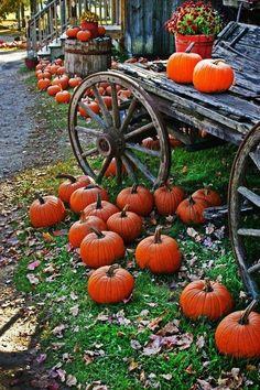 Get the pumpkins ready...