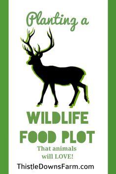 Building a wildlife food plot is a great way to encourage animals, especially deer, to explore your property. Improve your animal habitat today! Deer Habitat, Food Plots For Deer, Family Emergency Binder, Raising Farm Animals, Hunting Land, Wild Deer, Gardening Tips, Sustainable Gardening, Indoor Gardening