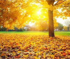 idées de sorties automne en foret