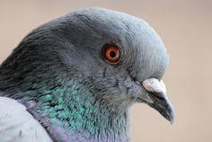 Patentan un nuevo método portátil y más rápido para determinar el sexo de las aves http://laoropendolasostenible.blogspot.com/2016/09/patentan-un-nuevo-metodo-portatil-y-mas.html