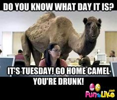geico hump day camel