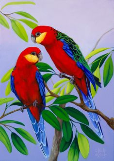 Ideas For Colorful Bird Painting Draw, The bird cage is equally a home for the chickens and a decorative tool. You are able to select what you may need on the list of bird cage models and get a great deal more particular images. Bird Painting Acrylic, Watercolor Bird, Wallpaper Nature Flowers, Beautiful Nature Wallpaper, Exotic Birds, Colorful Birds, Bird Drawings, Animal Drawings, Pretty Birds