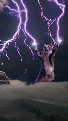 Lightning god cat wallpaper (requested higher resolution) - Animals